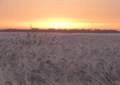 I profumi del grano