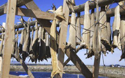 Il Merluzzo dell'Atlantico – Il Baccalà – Mira Conero